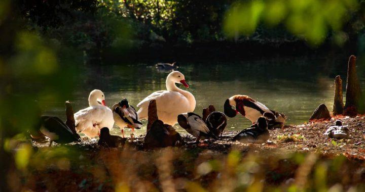 Acheter un étang : quel type d'étang et quelle réglementation ?