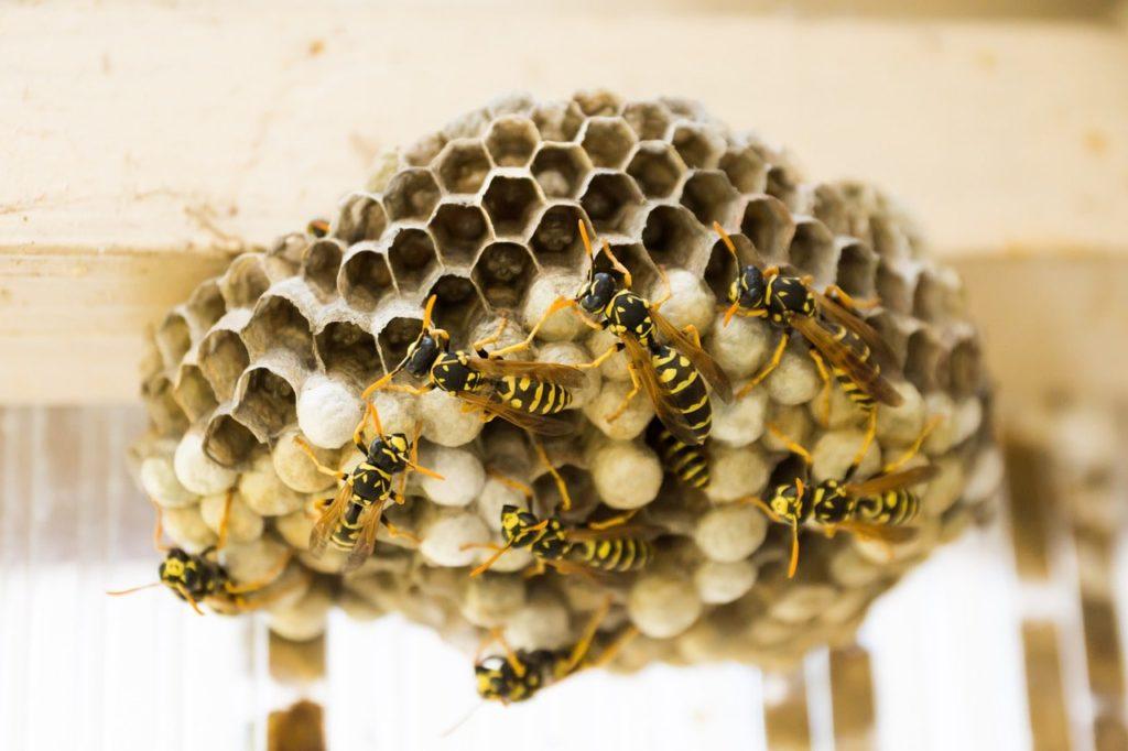 Essaim d'abeilles : locataire ou propriétaire ?